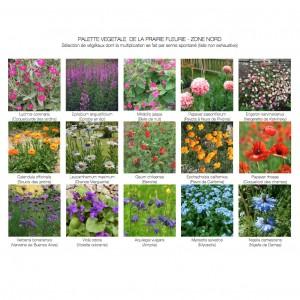Proposition de palette végétale dans le cadre d'un projet de prairie fleurie