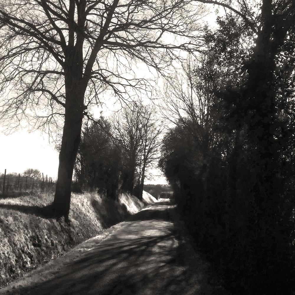 Chemin de campagne Chalonnes sur Loire 49