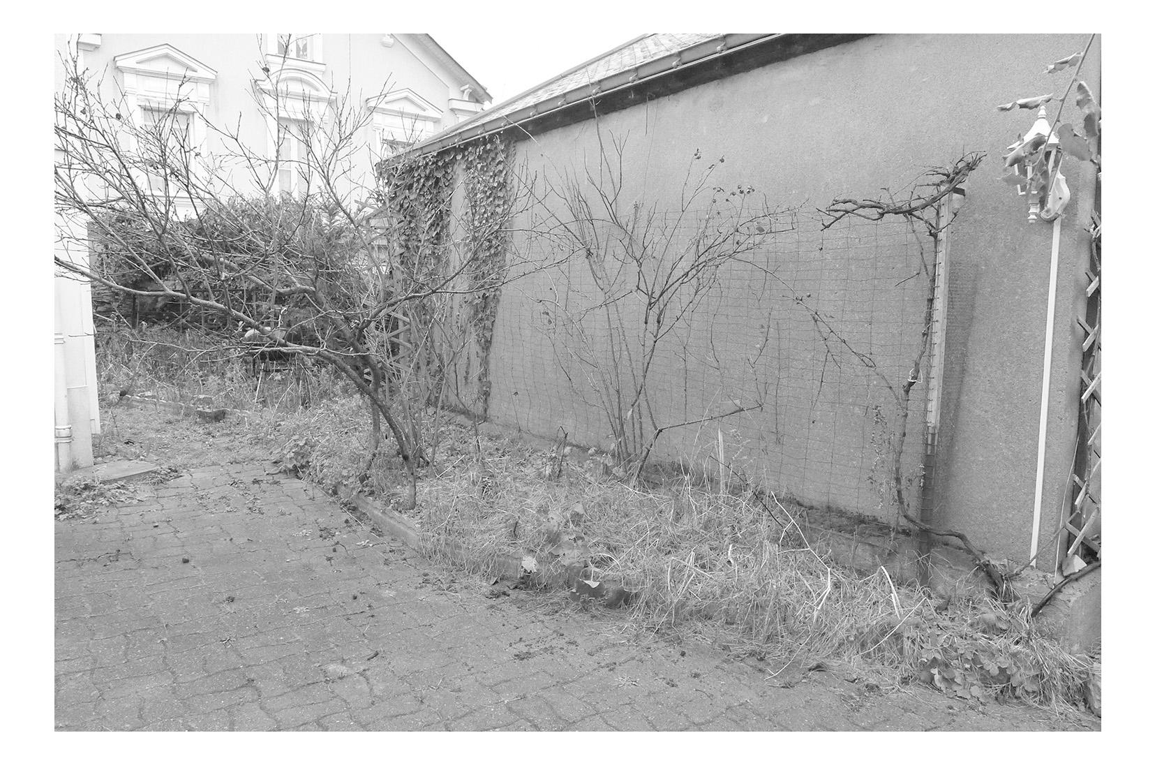 Projet de jardin paysager en centre ville d'Angers 49