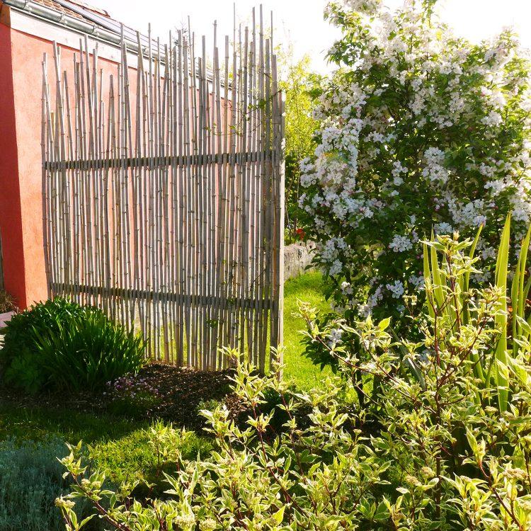 Remplacement d'une haie de bambous à Saint Laurent de la plaine 49