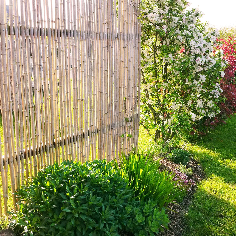 Remplacement d\'une haie de bambous-2 - L\'atelier au fond du jardin