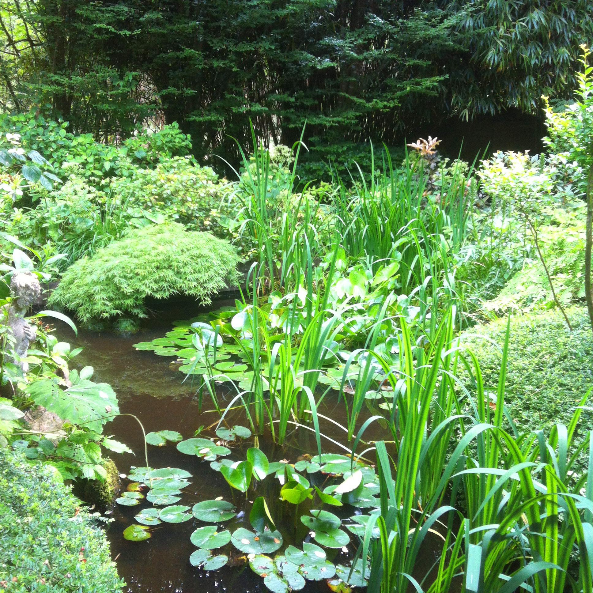 Jardin du Petit Bordeaux étang et roseaux