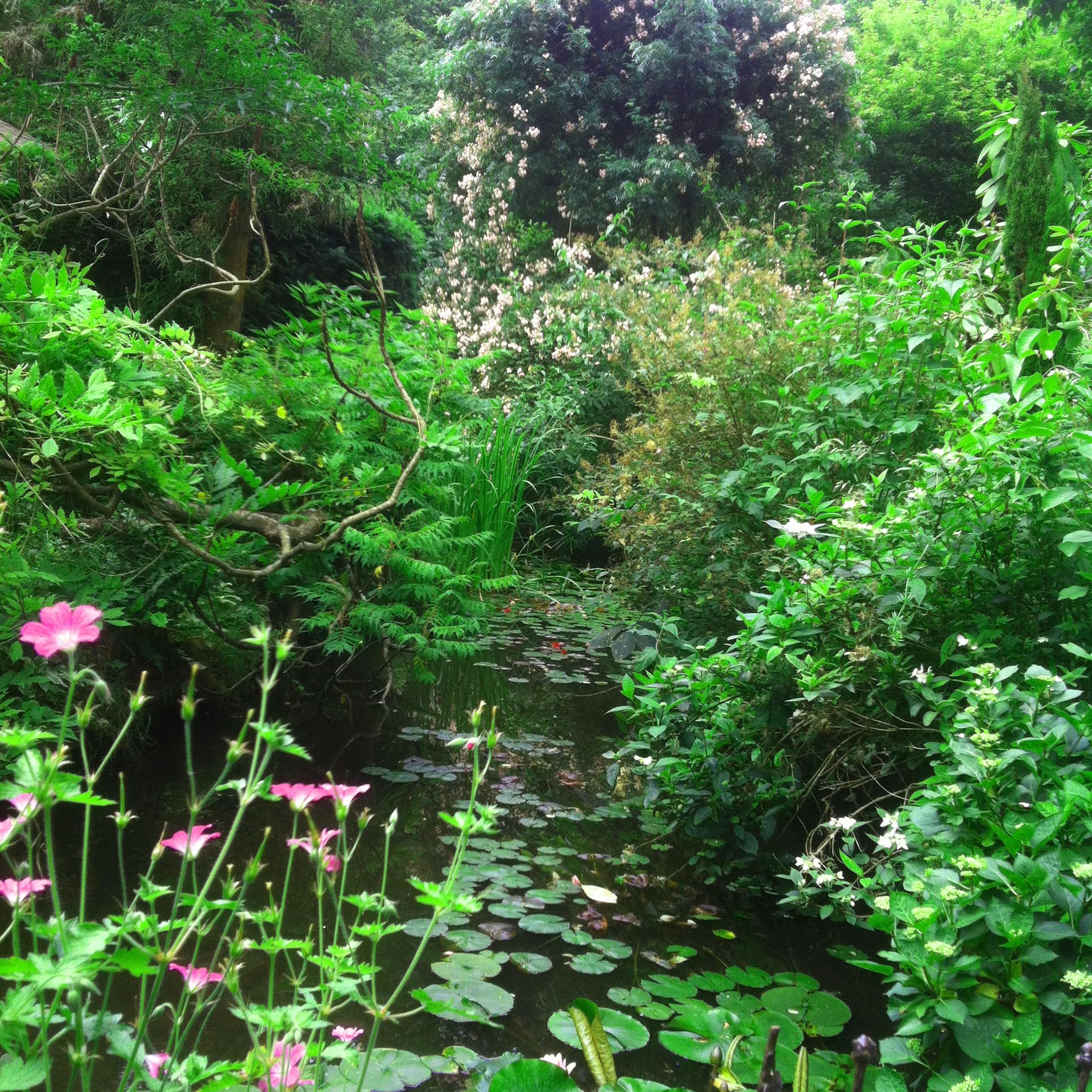 Jardin du Petit Bordeaux étang et rosier liane