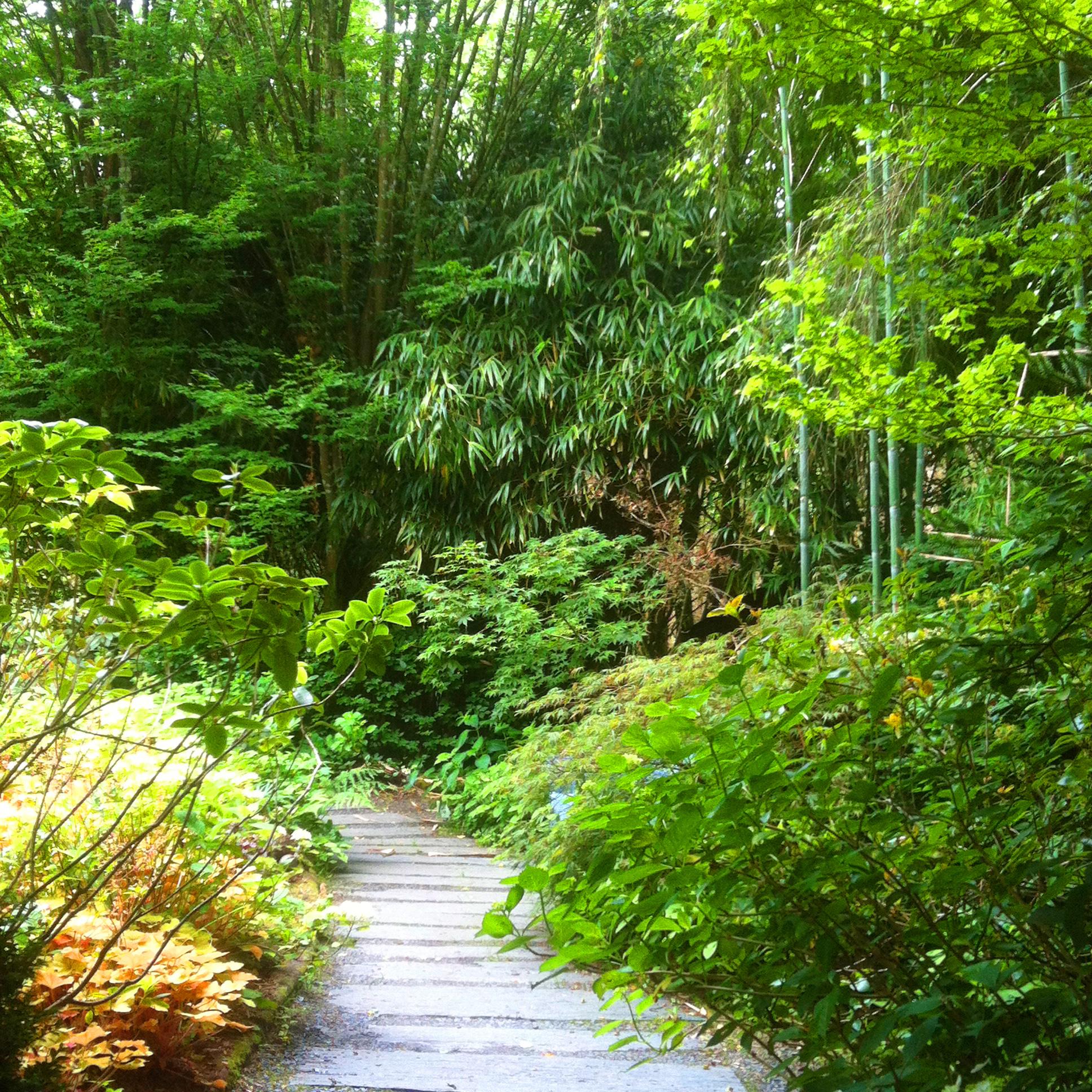 Jardin du Petit Bordeaux allée de shiste et bambouseraie