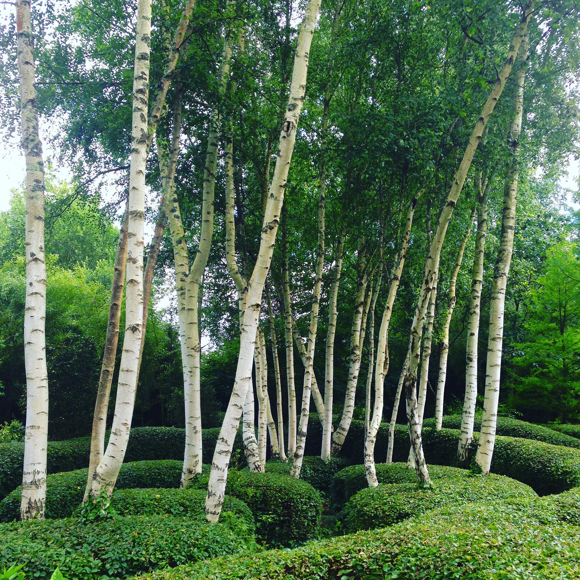 Jardin du Petit Bordeaux Bouleaux