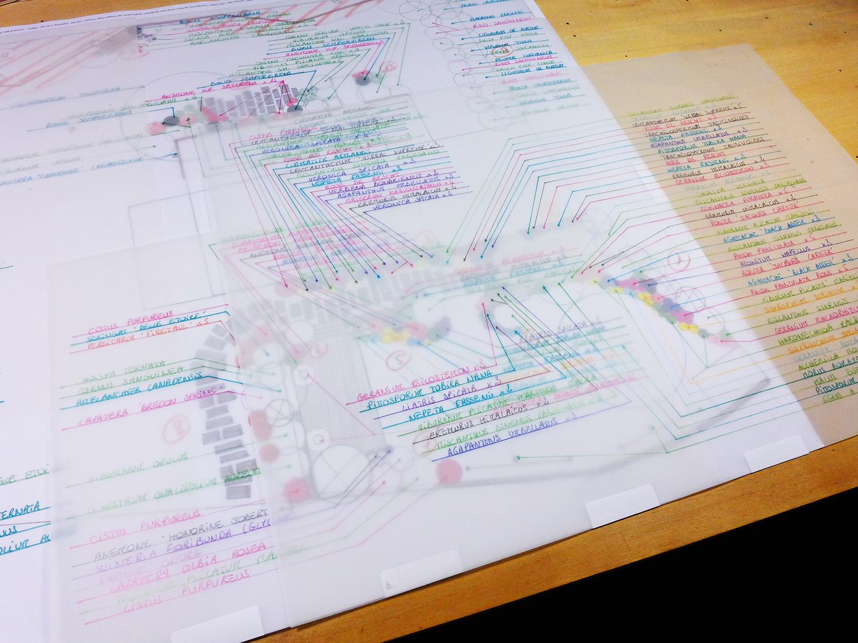Plan de plantation descriptif des vegetaux Chalonnes sur Loire