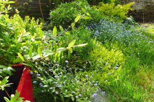 Coaching en jardinage et massifs de printemps